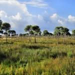 Übergang Dünen - Waldzone