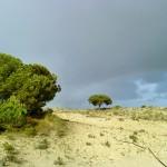 Dünenlandschaft in Coto Doñana