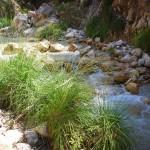 Pflanzen am Rio Chillar