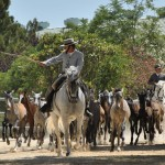 Pferdeauftrieb